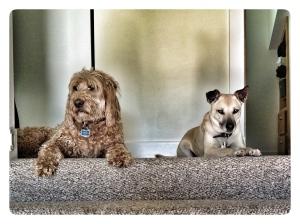 Cao & Dory await the BarkBox